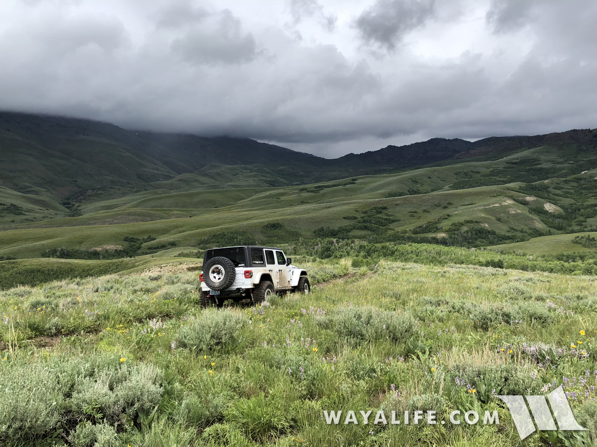 JL Wrangler in Jarbidge